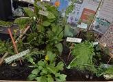 Plantines en exposición en el stand Plantar es Cultura